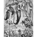 Carnivorous Plant Print - Black and White