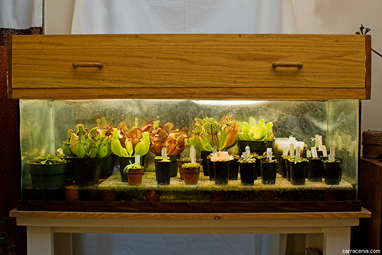 Don T Kill Them The Best Carnivorous Plants For A