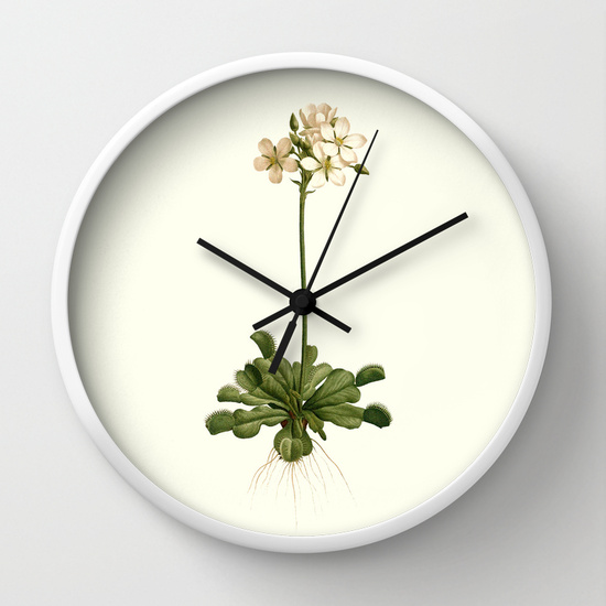 Vintage venus flytrap print on a wall clock
