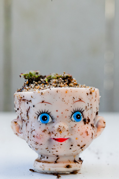Carnivorous plants in baby doll head planter