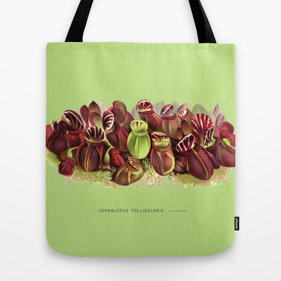 Cephalotus follicularis botanical art tote bag.