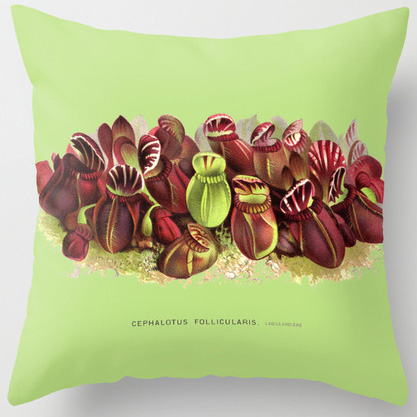 Cephalotus follicularis botanical print pillow