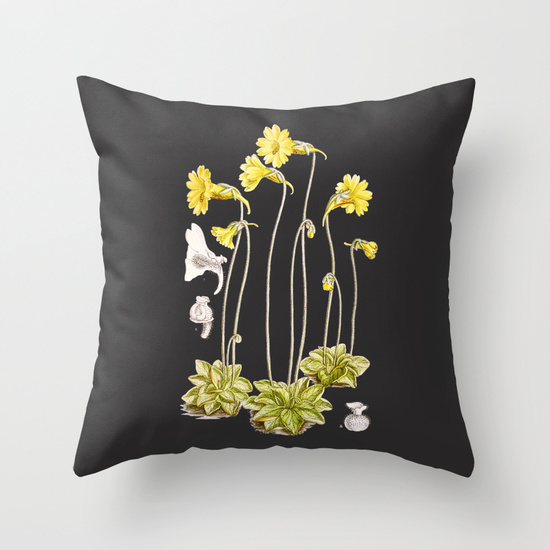 Carnivorous butterwort Pinguicula lutea botanical illustration printed on throw pillows!