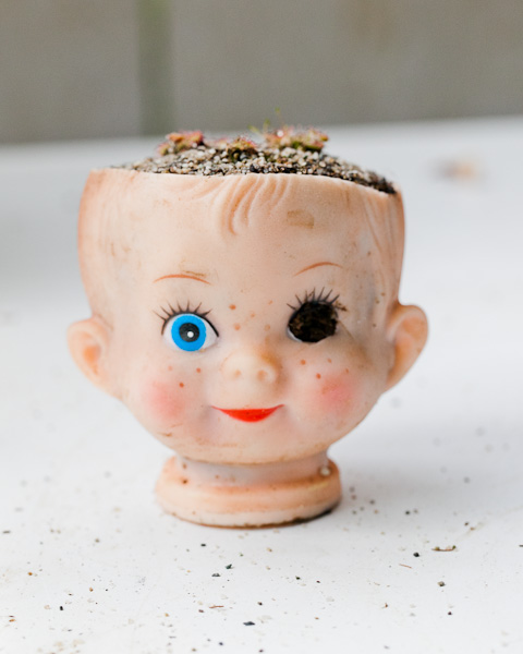 Cute or creepy? Carnivorous sundew plants in baby doll head planter. Click to learn more!