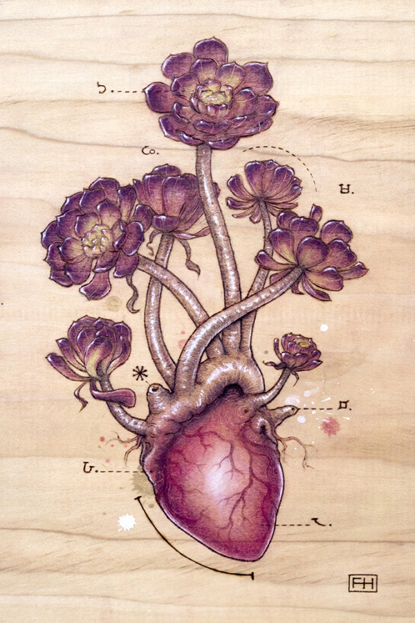 "Heart Transplants by Fay Helfer. ""Aeonium Heart"""