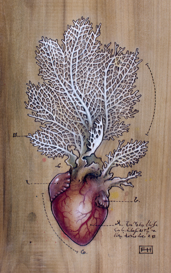 "Heart Transplants by Fay Helfer. ""Sea Fan Heart"""