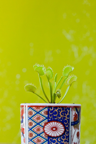 Venus flytrap in a thrifted ceramic container. Click to see more!