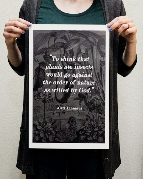 Holding the Carl Linnaeus quote print for size reference.